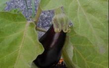 Plantar em Vaso Reaproveitado – O Que Cultivar em Caixas ou Recipientes Velhos e Usados
