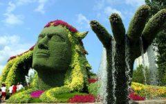 Quando Podar Plantas – Dicas de Tipos de Poda, Quando e Como Podar Flores
