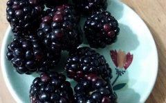 Como Plantar Framboesa – Nutrientes, Dicas de Cultivo e Foto da Fruta Vermelha