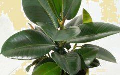 Plantas de Vaso Dentro de Casa – Flores de Interior que Absorvem a Poluição e Purificam o Ar