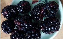 Lista de Alimentos para Tratar Inflamação – Substâncias com Ação Anti-inflamatória