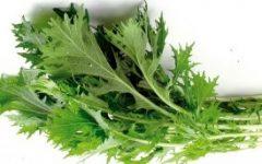 Verduras Orientais em Vasos – Tipos de Hortaliça Bok Choy, Como Cultivar Mizuna