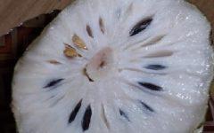 Suco de Graviola com Leite – Benefícios e Vitaminas da Fruta