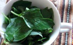 Como Fazer Pesto de Manjericão – Dicas de Congelamento e de Uso