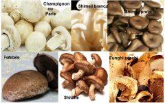Benefícios e Vitaminas dos Cogumelos – Tipos Mais Comuns de Fungos Comestíveis